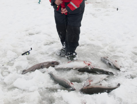 Fiskefest med negativa följder