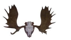 ollearlestigs-horn1