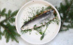 Salt – kökets grundpelare